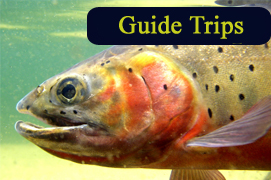 Guide Trips